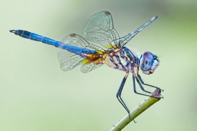 Dragonfly head image
